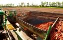 Технология и способы хранения моркови на складах