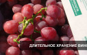 Хранение винограда в регулируемой атмосфере (РГС)