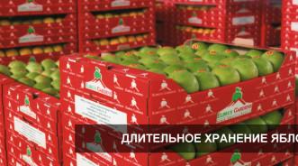 Длительное хранение яблок на складе