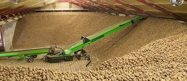 хранение картофеля на складах