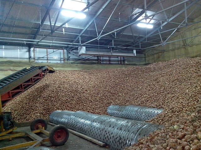 Технология хранение лука на складах и в овощехранилищах