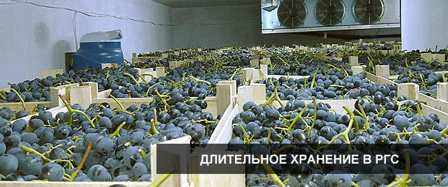 Хранение фруктов и овощей в РГС (регулируемой газовой среде)