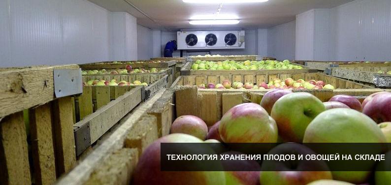 Как организовать хранение плодоовощной продукции на складе?